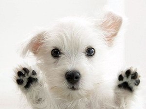 Puppy with paws up